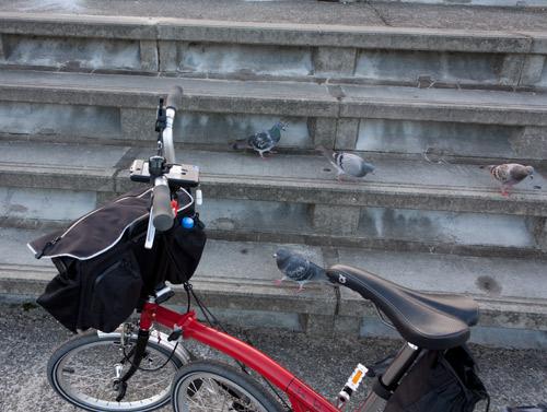 なにわ自転車道 鳩