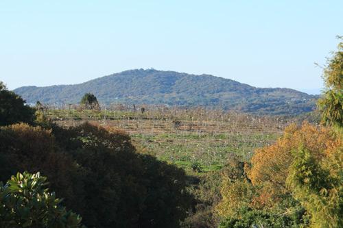 神戸ワイナリー ブドウ畑