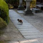 奈良自転車道ポタリング3