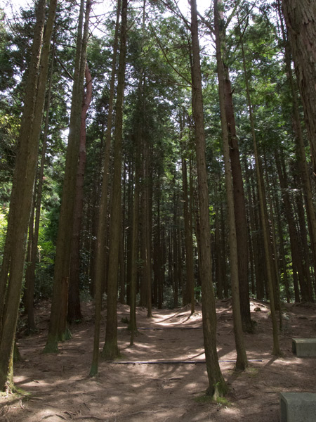 花のじゅうたん敷地奥の森