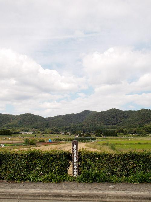 大沢池周辺