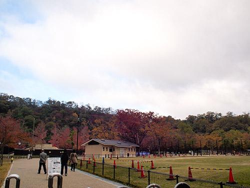 宝ヶ池公園界隈