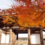 MIHO MUSEUM~石山寺ポタリング3