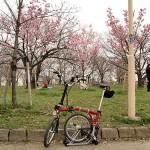 春の洗車と桜捜し
