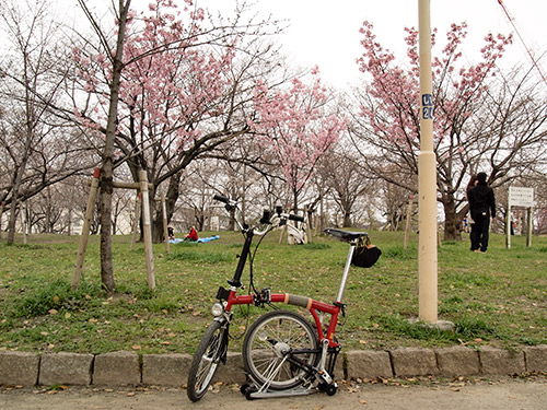 毛馬桜之宮公園 さくら
