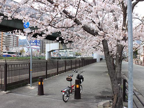 さくら 生田川