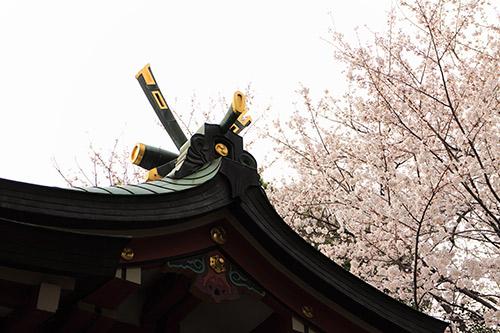 さくら 岡本八幡神社