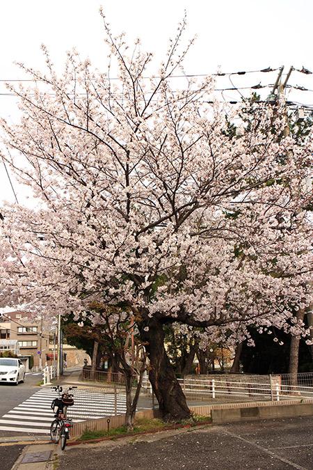 さくら 森稲荷神社