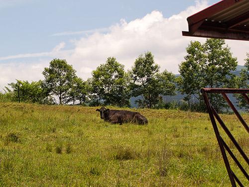 みつえ高原牧場