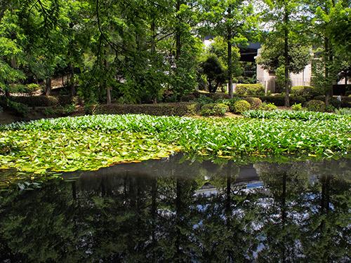 須磨離宮公園 新池