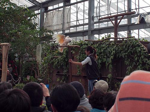 神戸花鳥園  バードショー