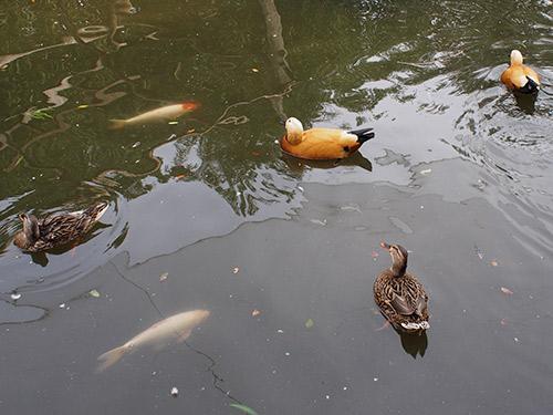 神戸花鳥園 中庭池
