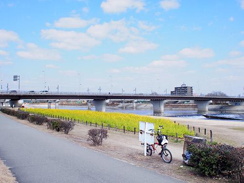 武庫川CR 菜の花