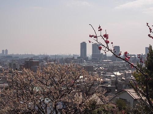 岡本梅林公園2014