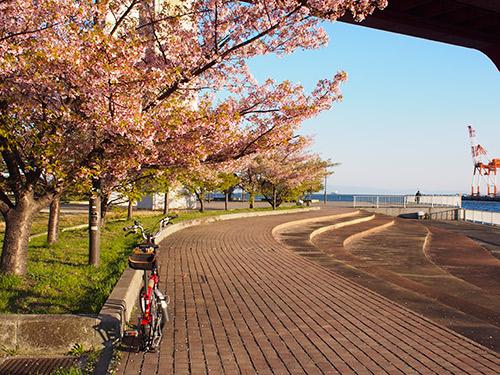 灘浜緑地の桜2014