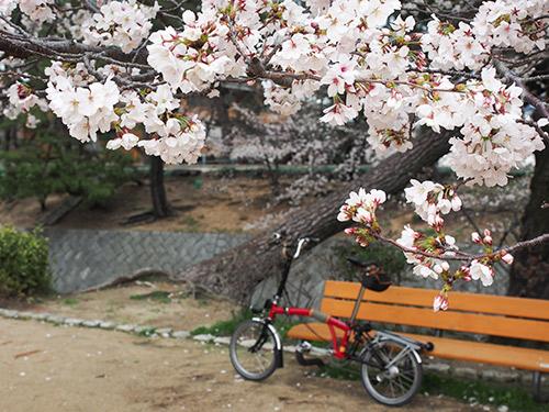 夙川の桜 2014