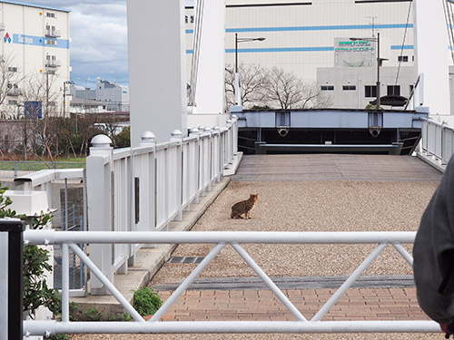 御前浜橋と猫