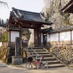 桜坂めぐり1