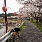桜坂めぐり3