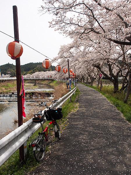水分桜 2014