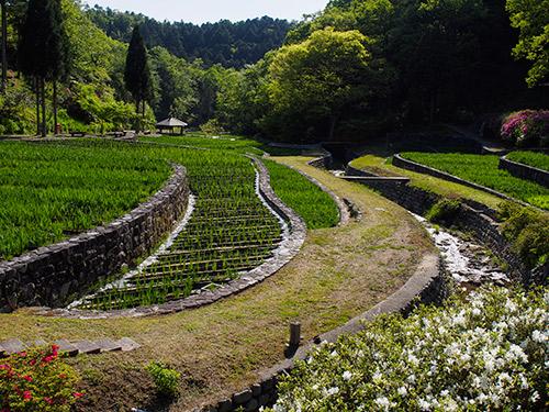播州山崎 花菖蒲園 2014