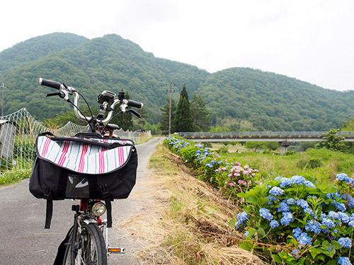 黒川沿いの紫陽花