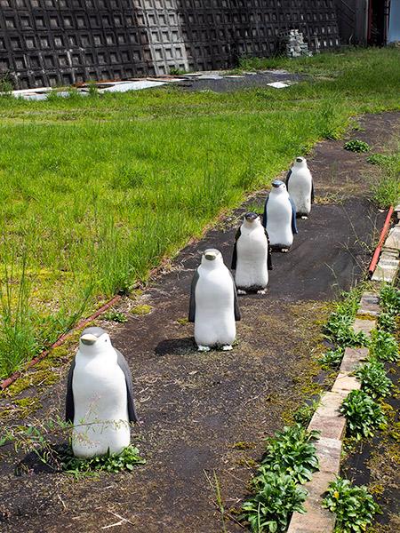信楽 ペンギン
