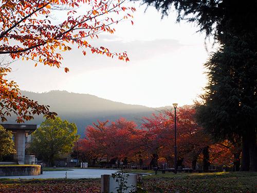 京都市美術館付近