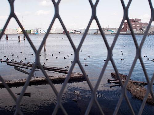 貯木場の水鳥
