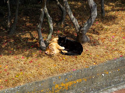 淡路島の猫