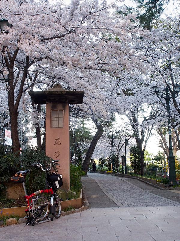 宝塚 花のみち 桜 2015