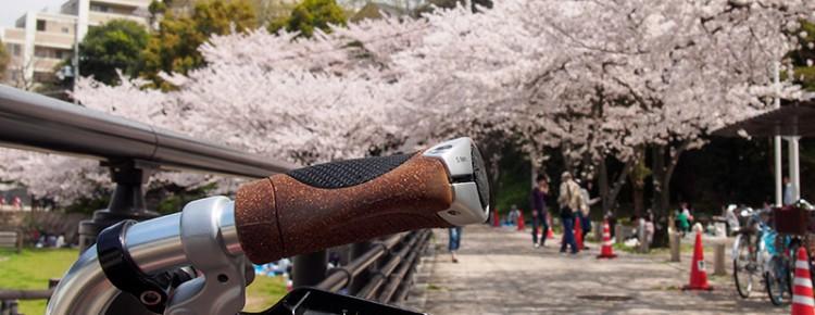 宇治川沿いの桜 2015