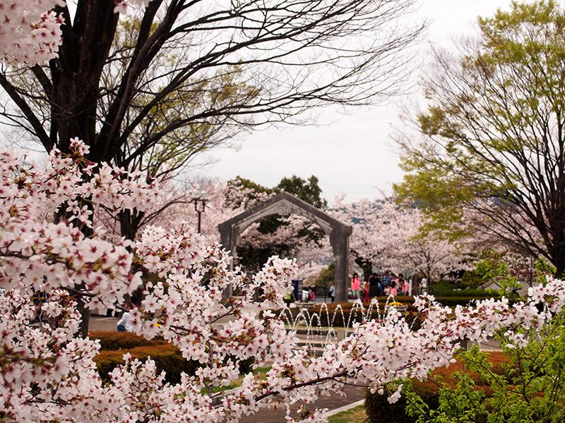 神戸市 水の科学博物館 桜 2015