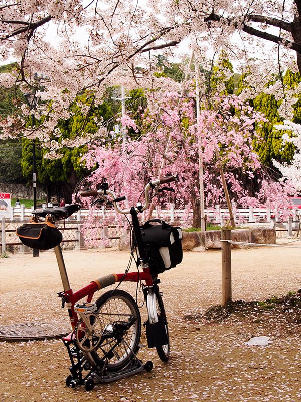 深田池公園 桜 2015