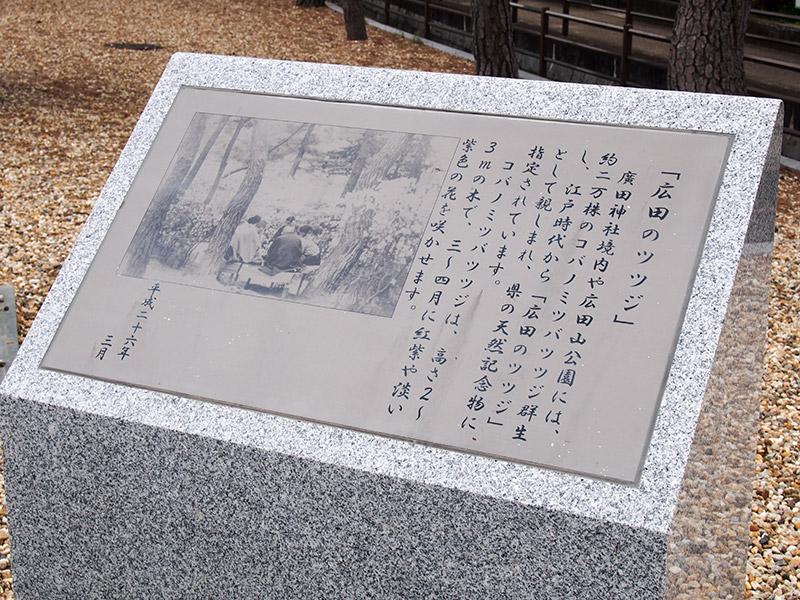 広田のツツジ