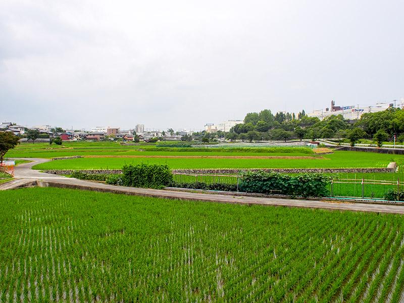千里川沿いの水田