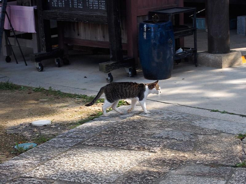 須磨寺 ねこ