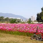 武庫川コスモス園、スーパーハード