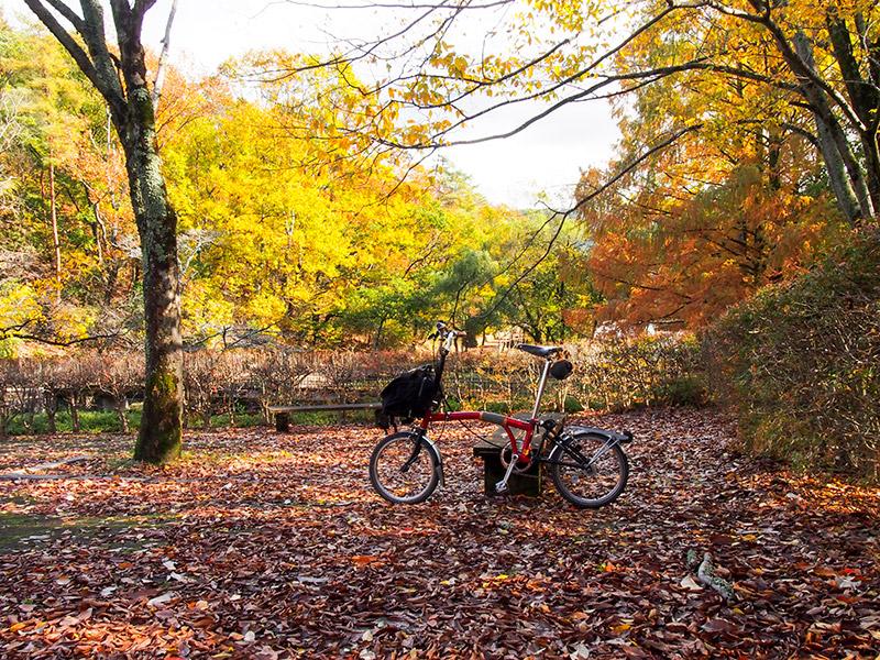 宝ヶ池公園 紅葉 2015