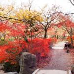 京都紅葉残照