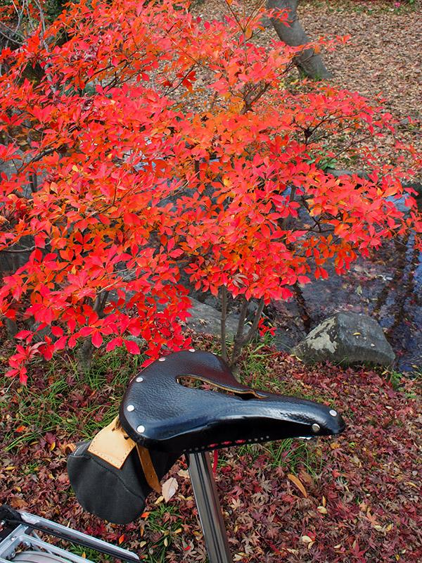 梅小路公園 紅葉 2015