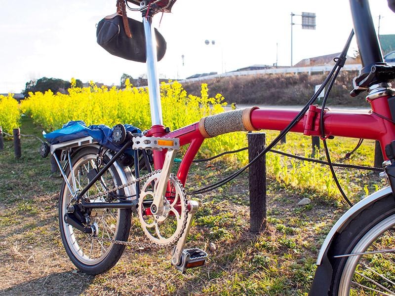 武庫川自転車道 菜の花 2016