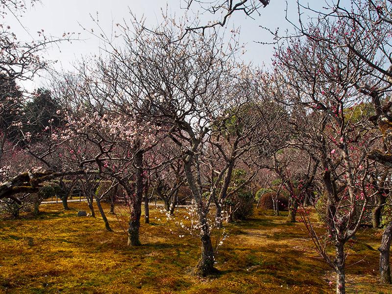 小野梅園 2016