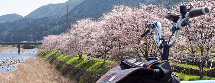 八木川 桜 2016
