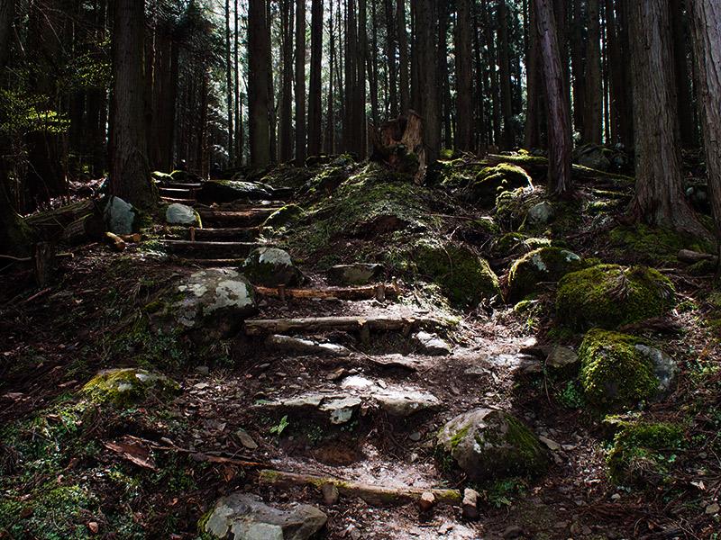 樽見の大桜 登山道