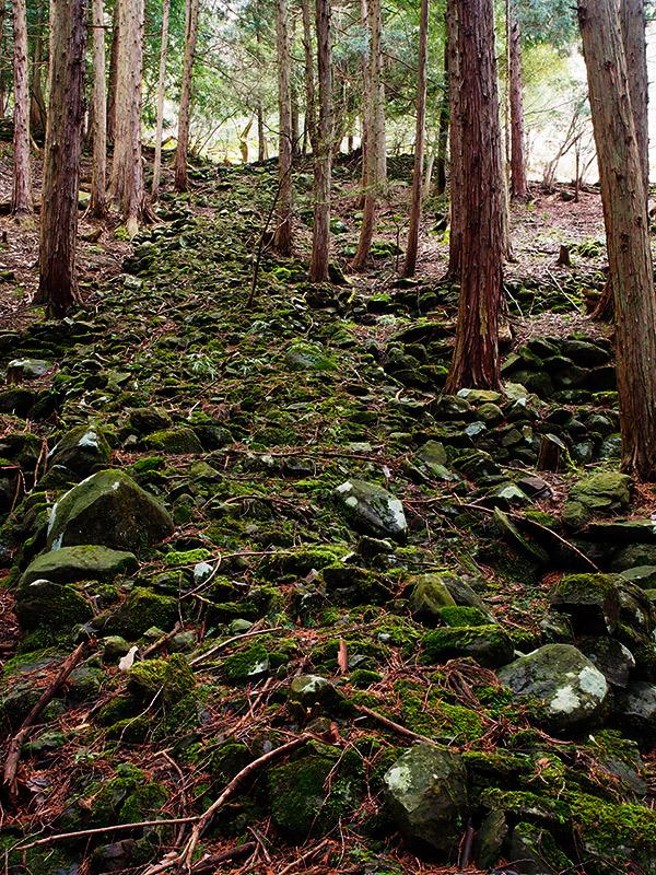 樽見の大桜 登山道 2016