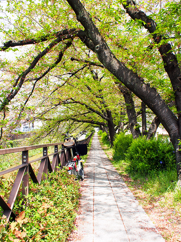天神川沿い