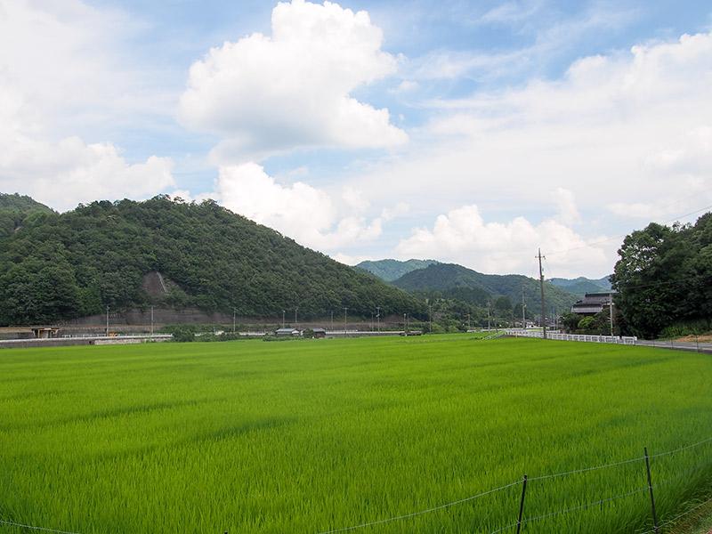 岡山県美作 水田
