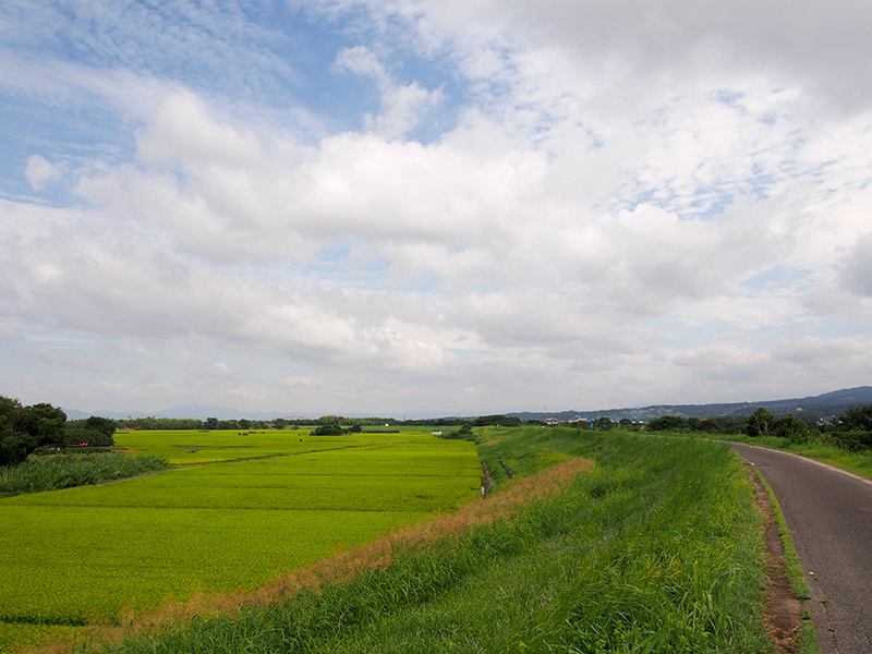 八幡木津自転車道からの眺め