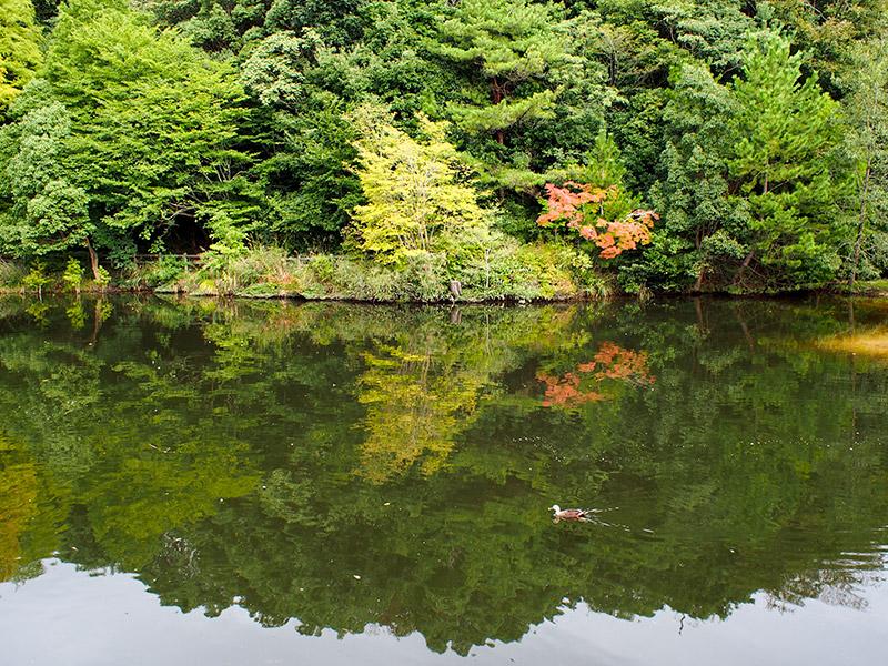 甲山森林公園 みくるま池
